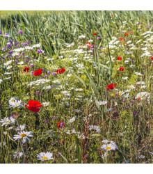 More about Luční květy na obohacení porostu - prodej semen - 50 g